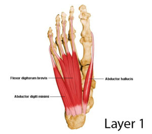intrinsic foot muscles layer 1